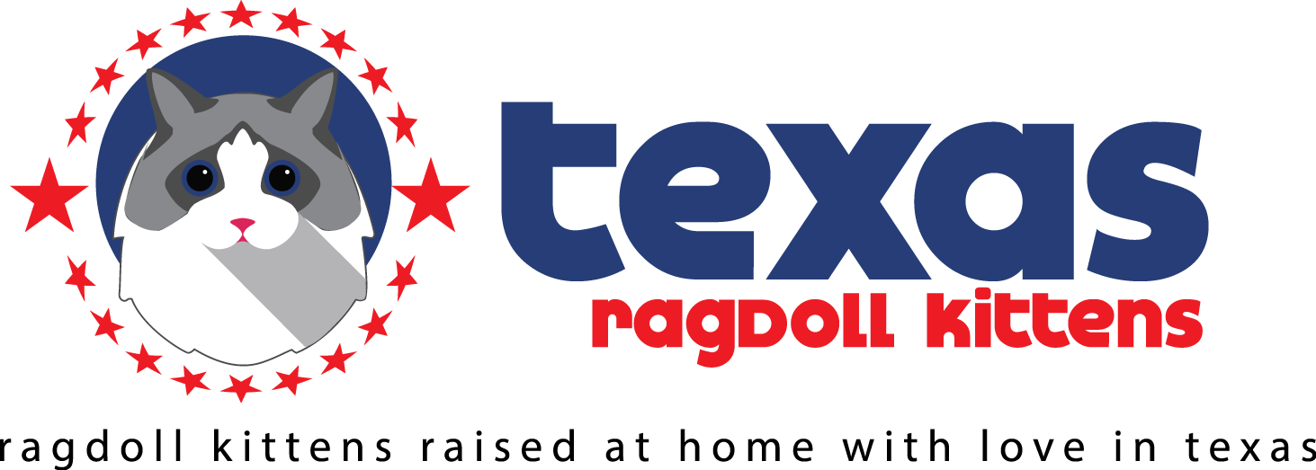 Texas Ragdoll Kittens